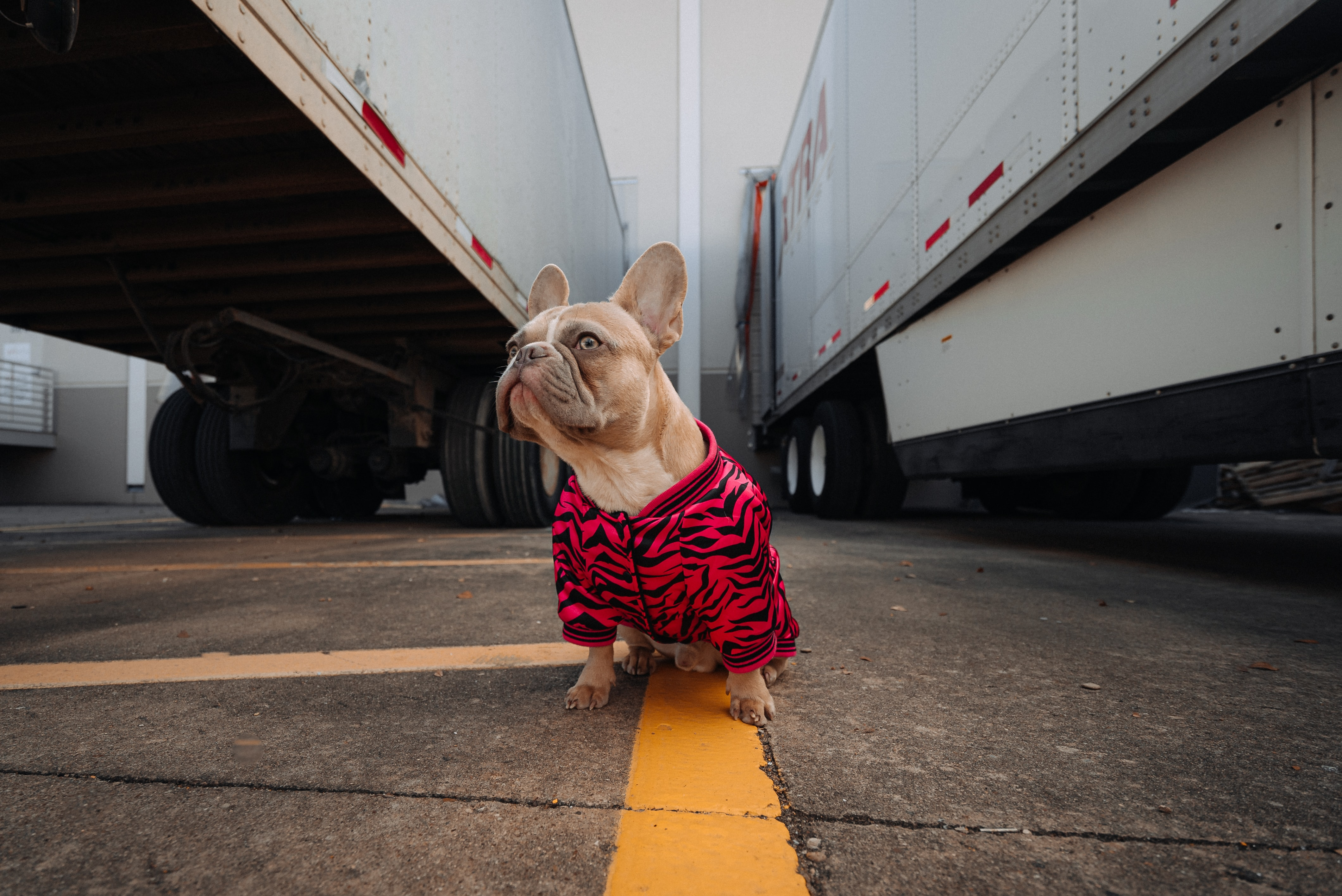 How to choose your pet co-pilot for trucking
